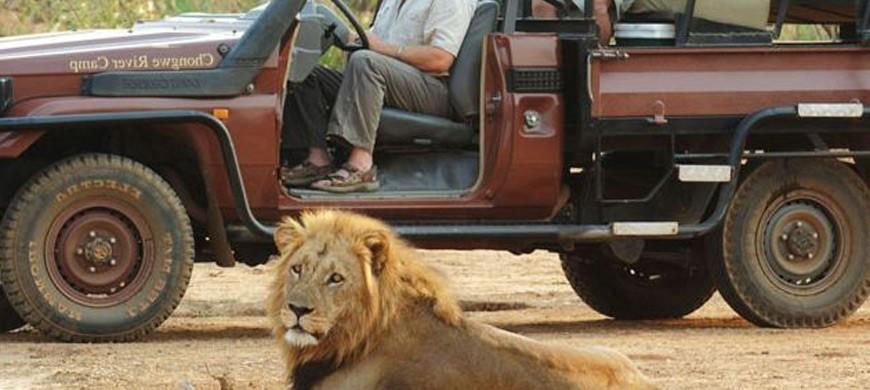 lion-drive-chongwe.jpg