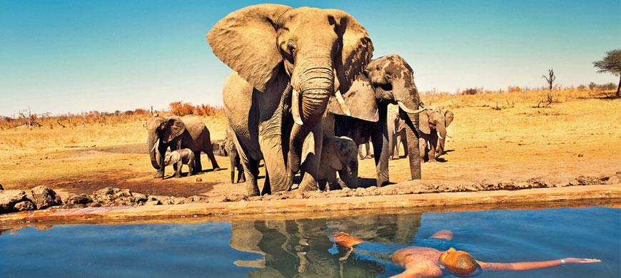 870_allofhwange_elephants.jpg