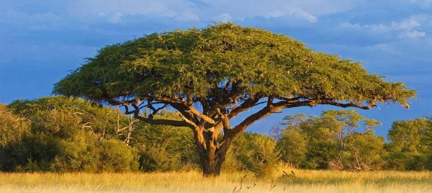 870_allofhwange_tree.jpg