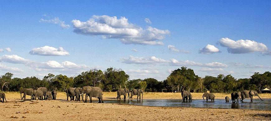 870_allhwange_elephants.jpg