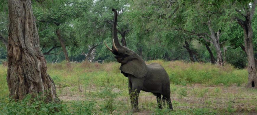 870_bestofzim_elephant.jpg