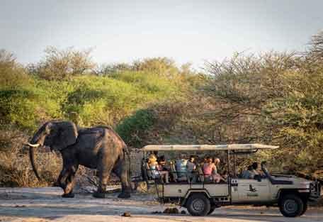 456-safari-experience3.jpg