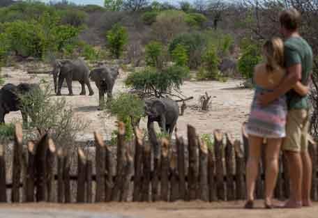 456-safari-experience8.jpg