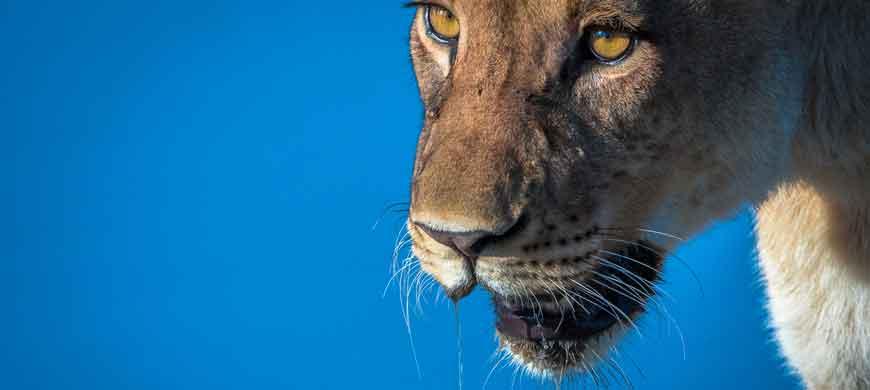 Tuskers-wide1.jpg