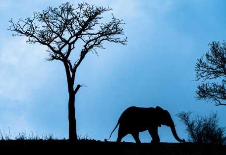 456-wilderness-trails-safari.jpg
