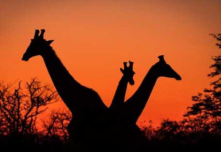 456-wilderness-trails-safari2.jpg