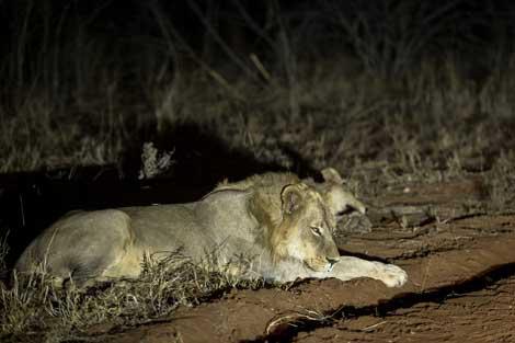 456-wilderness-trails-safari5.jpg