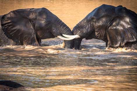 456-wilderness-trails-safari6.jpg