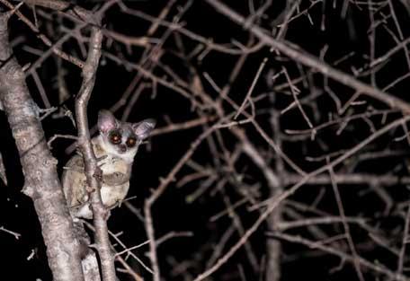 456-wilderness-trails-safari8.jpg
