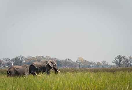 456-safari-experience6.jpg